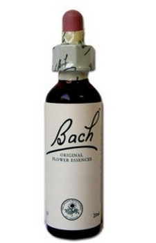 Fleur de Bach N°25 - Red Chesnut (marronnier rouge)